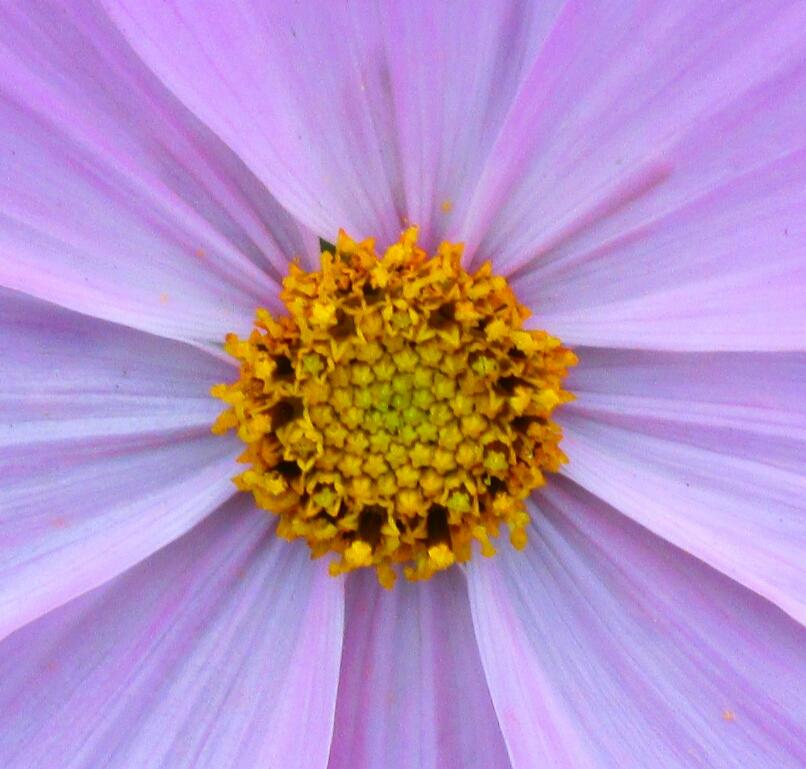 Blüte von Nicole Tietz